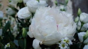 matrimonio a sorrento dettaglio fiori